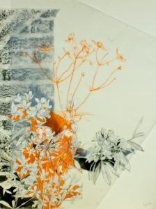 21) Venetia Norris, Mallows' Rhododendron, Collage- pencil rubbings, crayon and graphite on paper, artwork, 87 x 67cm, 2015 (image courtesy of the artist)